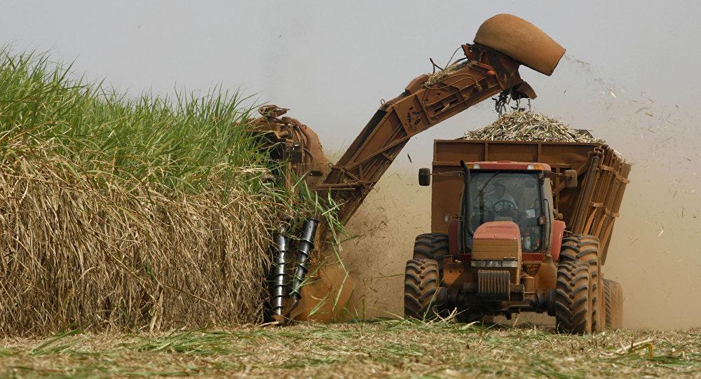Especialistas: o que falta para que o agronegócio alavanque de fato a economia brasileira?